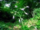 130825_fukushimasyajin_1