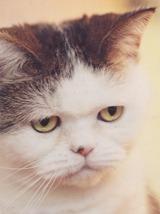 猫である ①